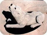 6_2b_Artic_wolf_l, Arctic Wolf sculpture, animals, dogs, sculpture, statue, art