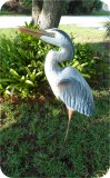 Heron44-nobase-061717, Heron Statue 44in, Approx 4 ft. Original Artwork, birds, herons, sculpture, statue, art