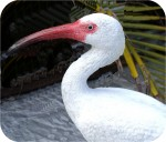 White Ibis sculpture