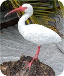 Ibis-White-bird-12_912, White Ibis 11x12 in. , birds, ibis, sculpture, statue, art