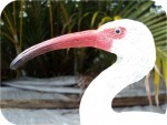 Ibis Wildlife sculptures of animal artworks..