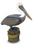 Lifesize Brown Pelican Statue , birds, pelicans, sculpture, statue, art