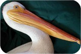 1_3b_lifesize_wpelicanhead500336,  Lifesize White PELICAN realistic art sculpture, birds, pelicans, sculpture, statue, art