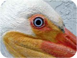 1_3b_lszwpelicaneyedetail400300,  Lifesize White PELICAN realistic art sculpture, birds, pelicans, sculpture, statue, art