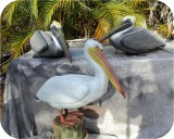 beautiful lifesize pelicans