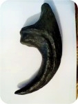 Fossil Allosaurus Claw 8 in. , fossils, , sculpture, statue, art