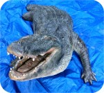 Alligator 15 Foot Partial. , reptiles, Alligator-Statue-13ft, sculpture, statue, art