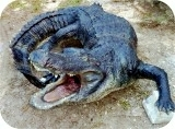 Reptiles Alligator Statue 14ft Gallery Photos
