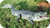 Alligator Statue 8 Ft Open Mouth , reptiles, Alligator-Statue-8ft, sculpture, statue, art