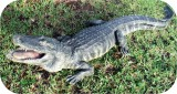 Reptiles Alligator Statue 8ft Gallery Photos