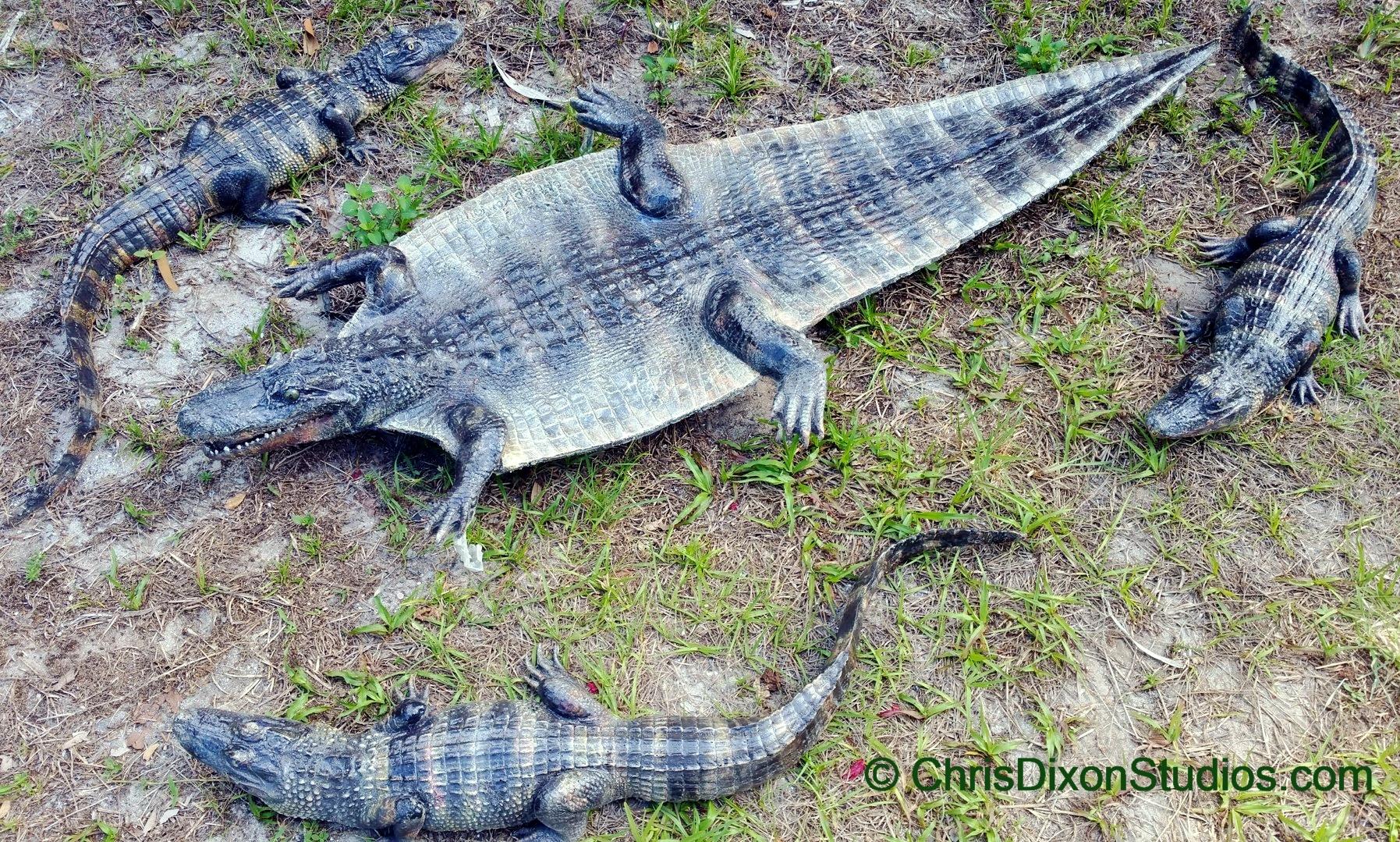 Alligator Rug Furniture Shop