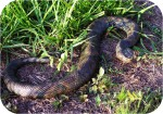 Reptile snakes Gallery Photos