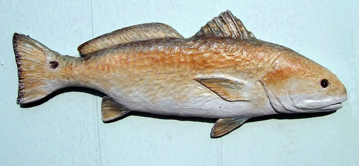 pictures of redfish