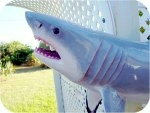 Shark-Great-White-3ft-painted-head, Great White Shark Statue 3 feet, sealife, sharks, sculpture, statue, art