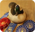 Realistic wildfowl woodcarving replicas at fair prices