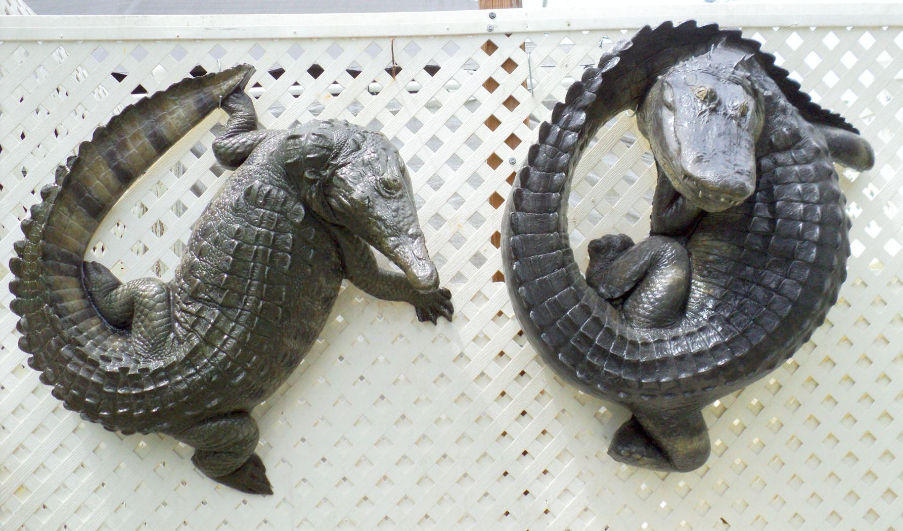 alligators crockadiles