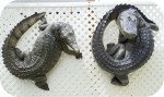 Crocodile and Alligator Curled Sculptures 30x32