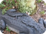 Realistic Alligators Crockadiles BIG statues, gators.. at fair prices