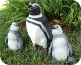 Magellanic Penguins for John Ball Zoo, MI. Made in USA