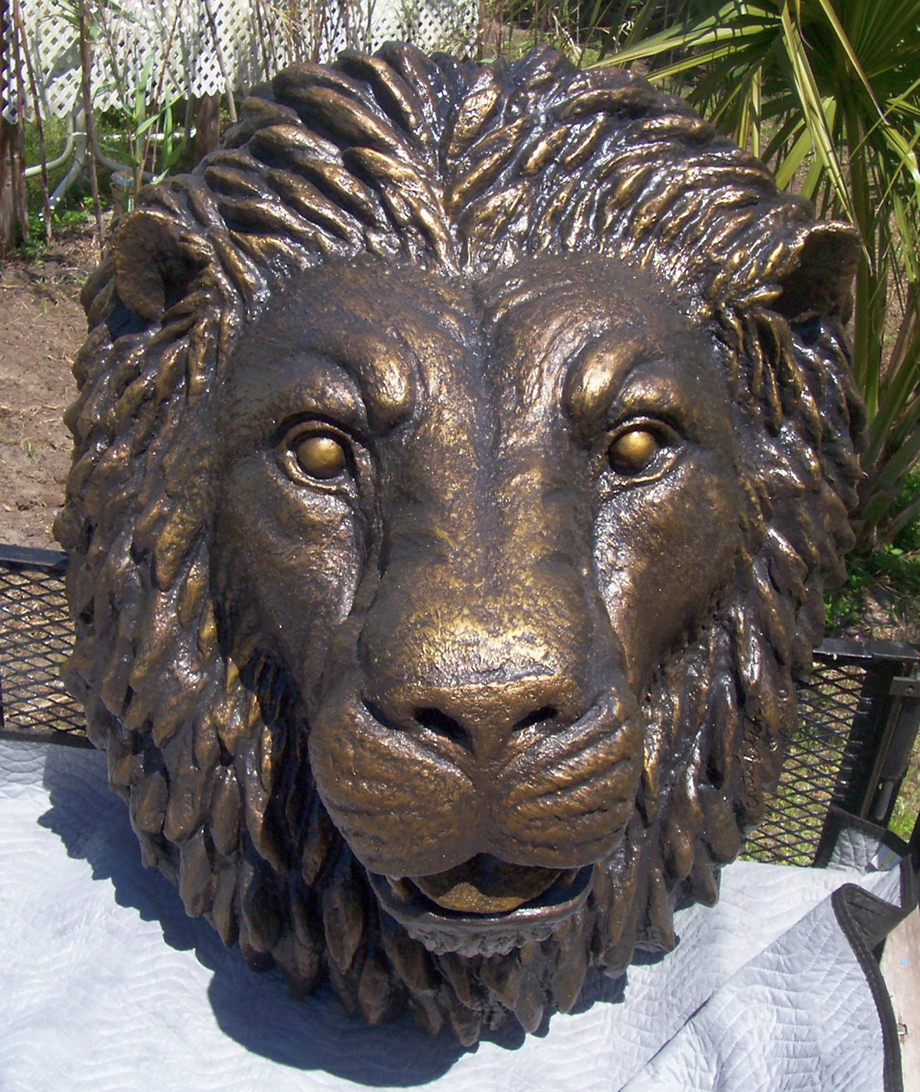 Lionhead3ft