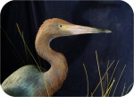 Great blue heron sculpture